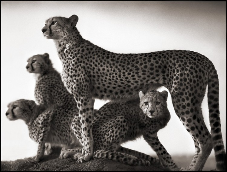 african-wildlife-nick-brandt-02